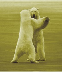 Polar Bear Waltz